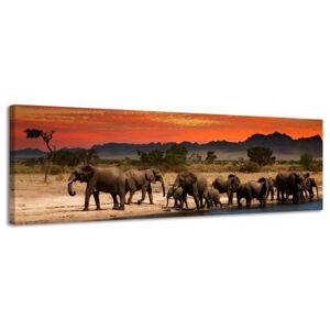 Obraz na plátne Panoráma, Slony, 36x118cm